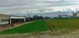 BELLA Real Estate ponúka na predaj stavebný pozemok v Poprade